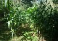 Inca recomenda redução do uso de agrotóxicos para prevenir câncer