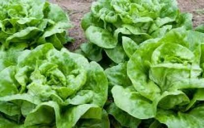 Hortaliças na Web trata de dieta saudável e de sua relação com o consumo de hortaliças