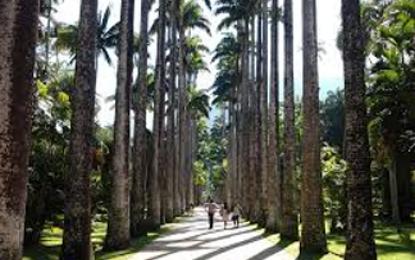 Jardim Botânico do Rio terá área registrada em cartório e retirará moradores
